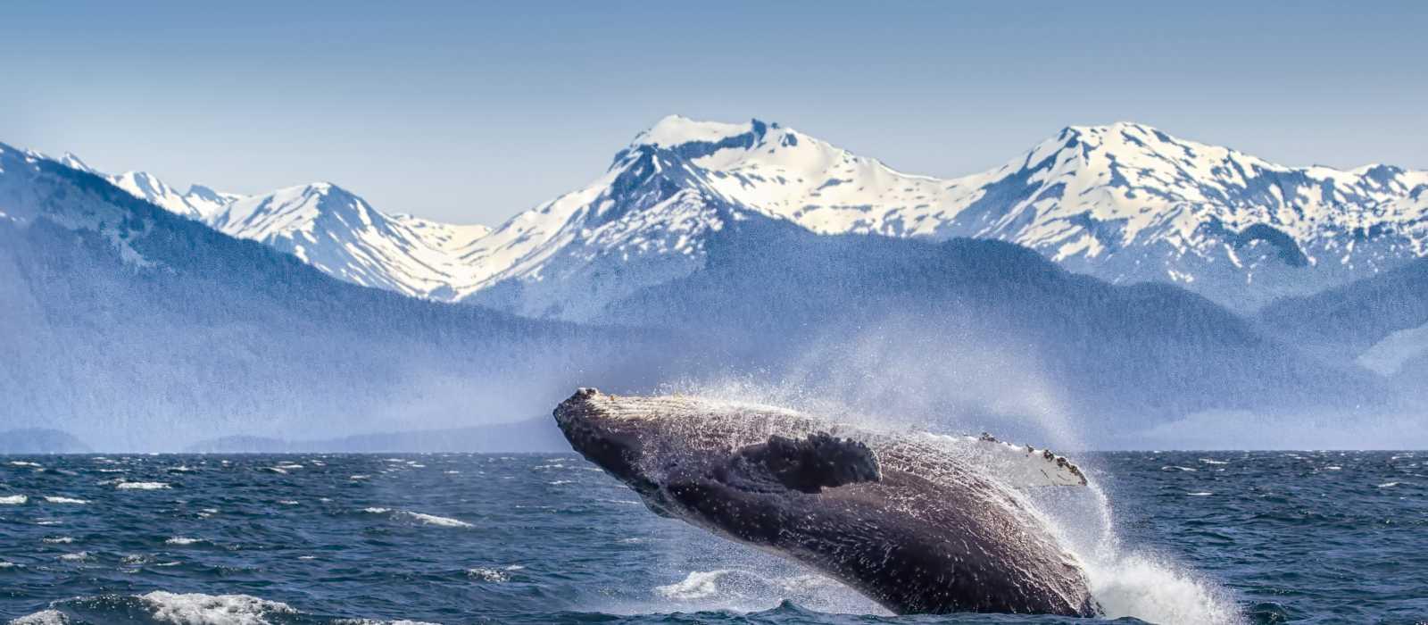 Whale Watching- Alaska